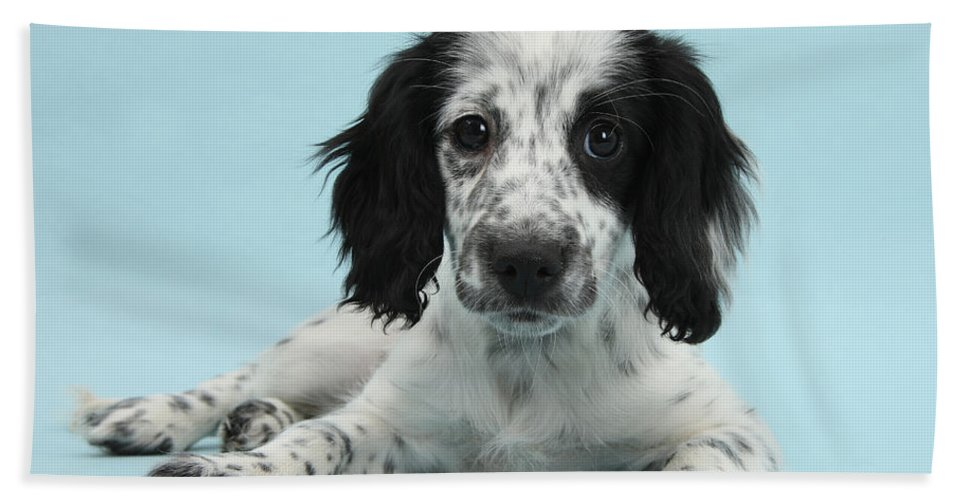 Nature Beach Towel featuring the photograph Border Collie X Cocker Spaniel Puppy by Mark Taylor