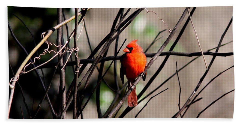 Nature Beach Towel featuring the photograph Brambles by Travis Truelove