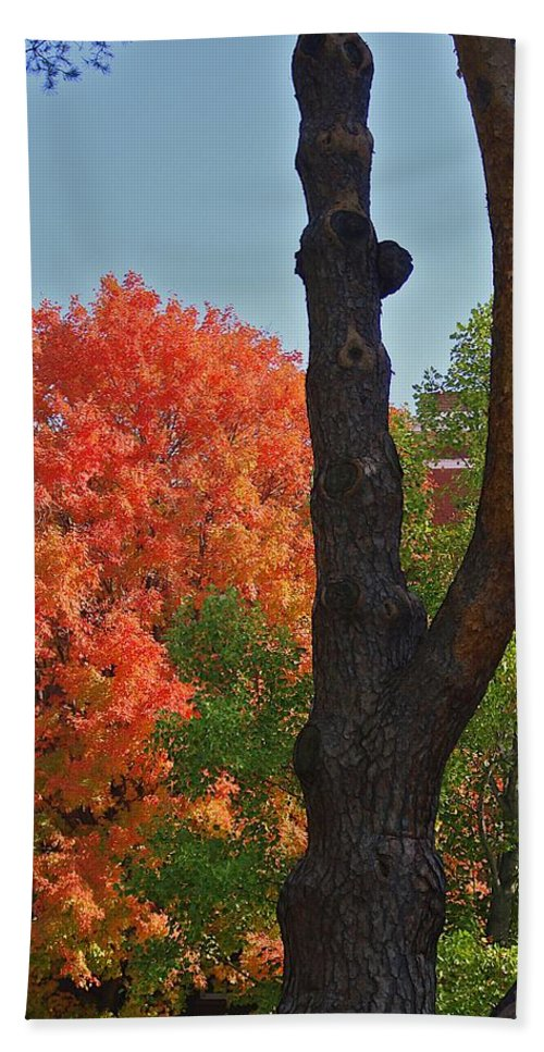 Fall Beach Towel featuring the photograph Brillant by Joseph Yarbrough