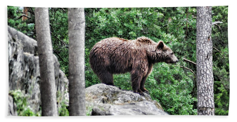 Bear Beach Towel featuring the painting Brown Bear 208 by Dean Wittle