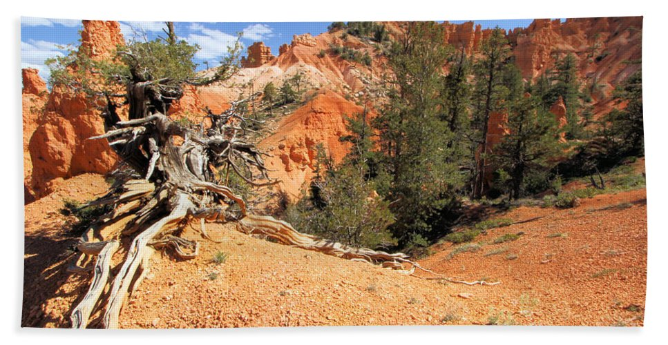 Hoodoos Beach Towel featuring the photograph Bryce Canyon Canyon by Adam Jewell
