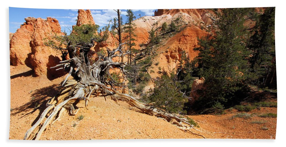 Hoodoos Beach Towel featuring the photograph Bryce Canyon Forest by Adam Jewell