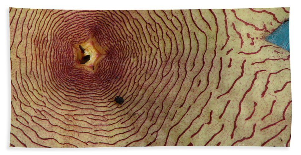 Nature Beach Towel featuring the photograph Bugs Life by Priscilla Richardson