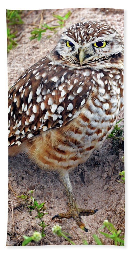 Burrowing Owl Beach Towel featuring the photograph Burrowing Owl by Dave Mills