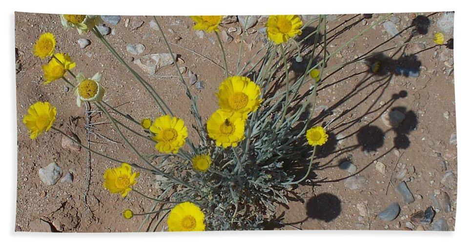 Pollen Beach Towel featuring the photograph Busy Bee by Jonathan Barnes