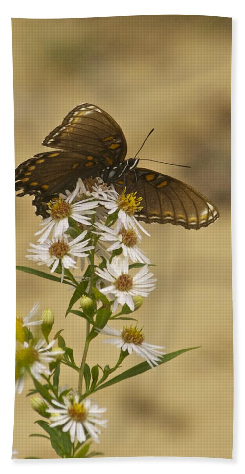 Butterfly Beach Towel featuring the photograph Butterfly 3321 by Michael Peychich