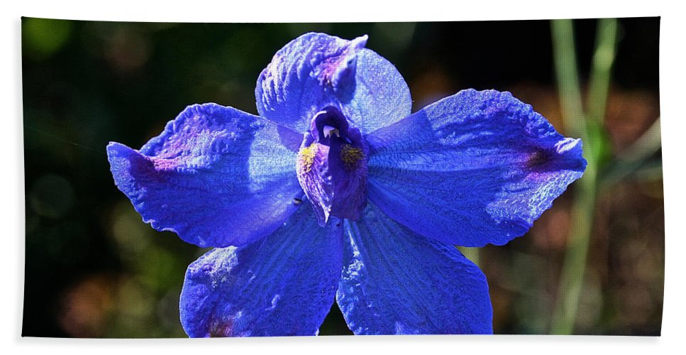 Outdoors Beach Towel featuring the photograph Butterfly Blue by Susan Herber