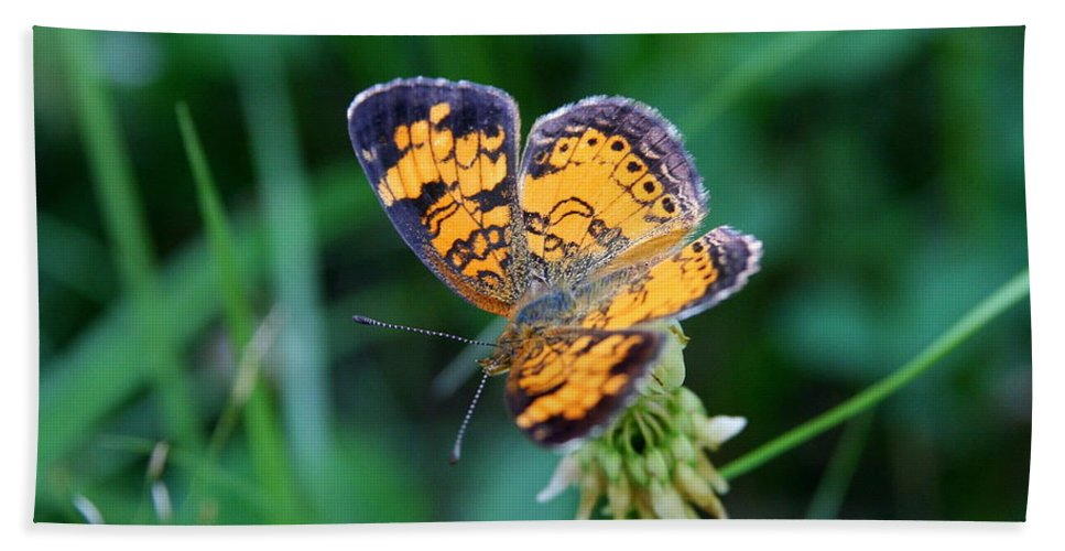 Butterfly Beach Towel featuring the photograph Butterfly In Square by Neal Eslinger
