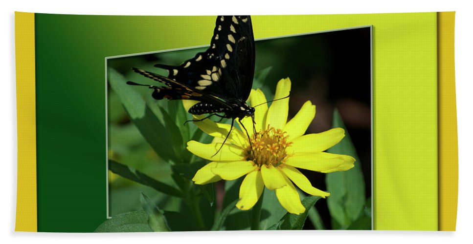Test Beach Towel featuring the photograph Butterfly Swallowtail 01 16 By 20 by Thomas Woolworth