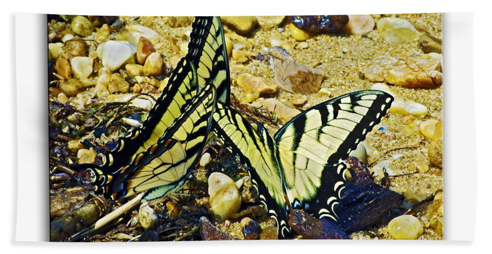 2d Beach Towel featuring the photograph Butterlies At The Beach by Brian Wallace