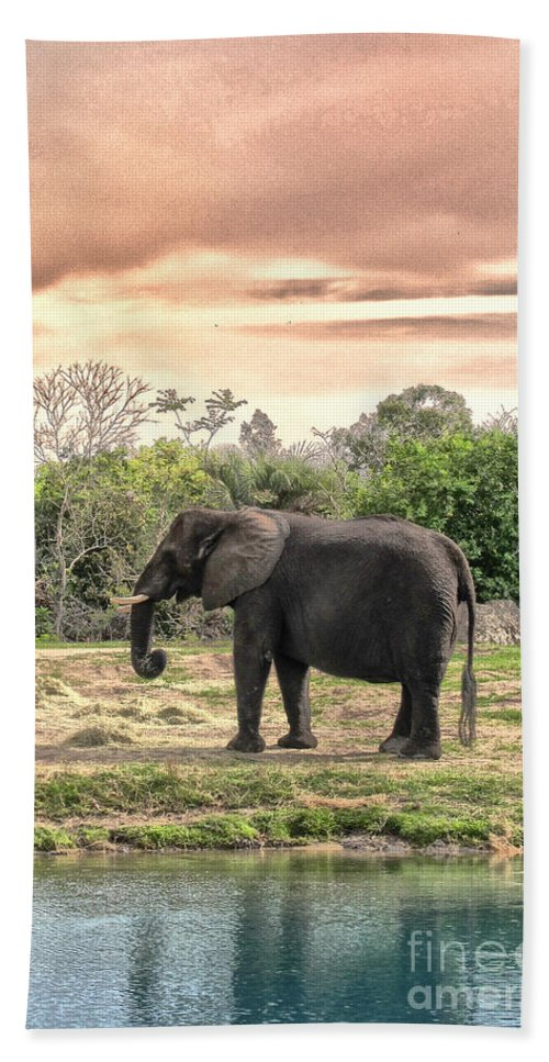 Elephant Beach Towel featuring the photograph By Waters Edge by Margie Hurwich