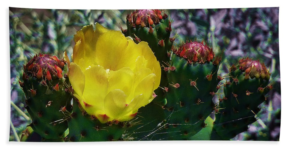 Opuntia Neoargentina Beach Towel featuring the photograph Cactus Blossom 8 by Xueling Zou