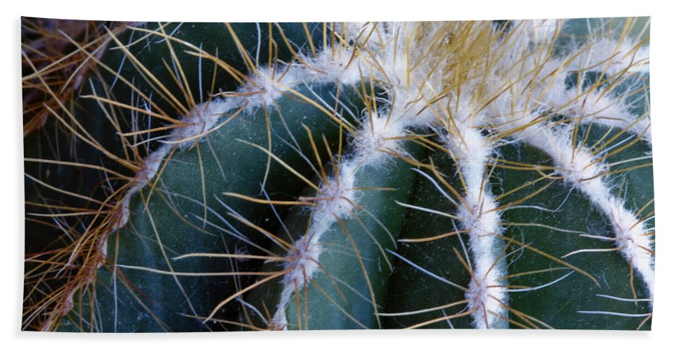 Cactus Beach Towel featuring the photograph Cactus I by Linda Dunn