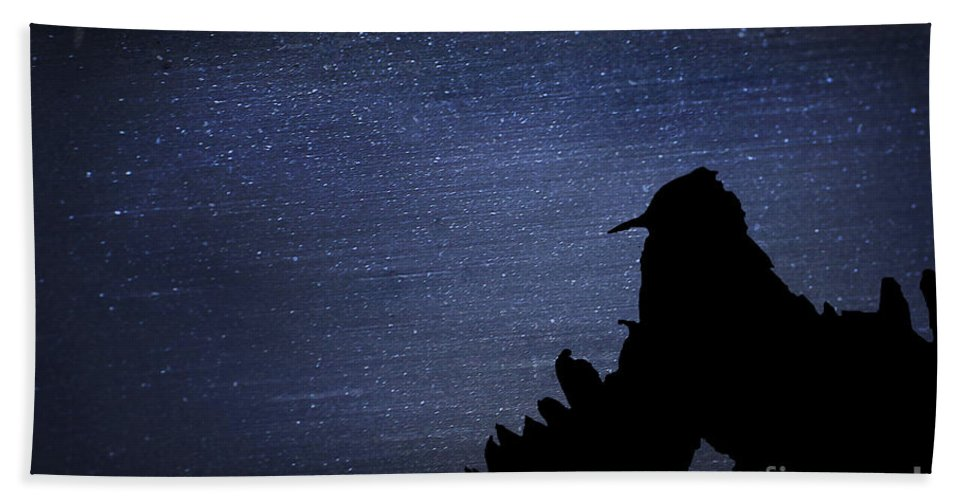 Fine Art Beach Towel featuring the photograph Cactus Wren In The Night by Donna Greene
