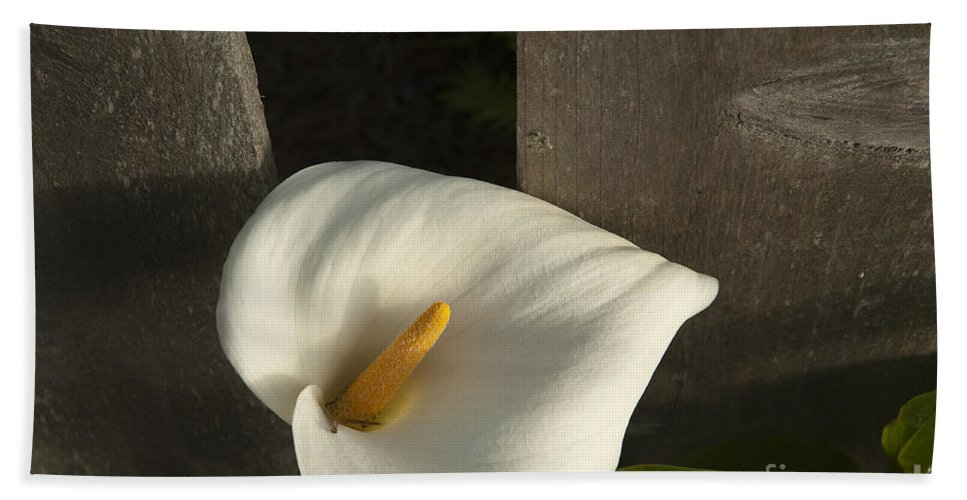 Sandra Bronstein Beach Towel featuring the photograph Calla Lily And Fence by Sandra Bronstein