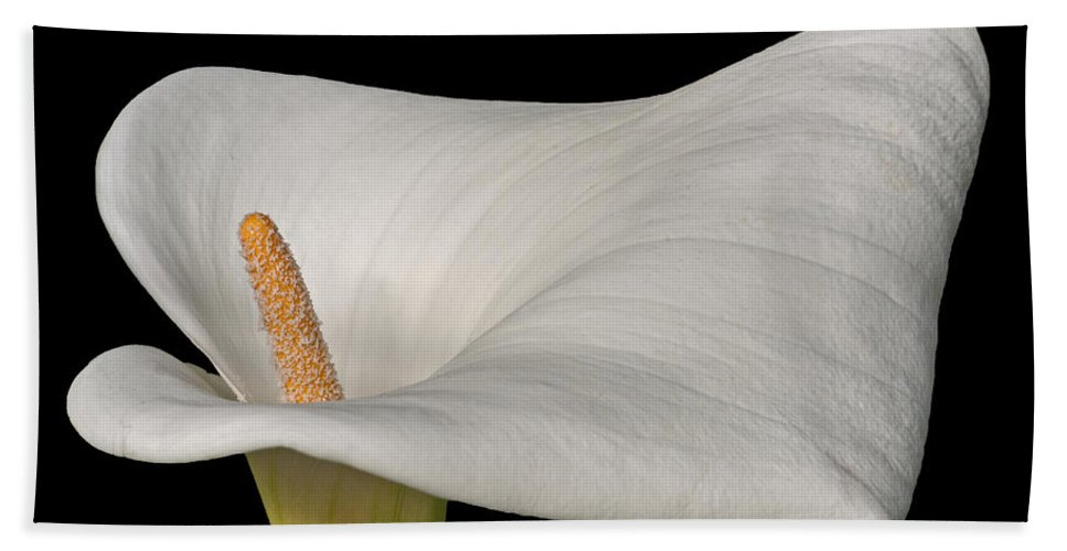 Calla Beach Towel featuring the photograph Calla Lily Flower by David Pringle