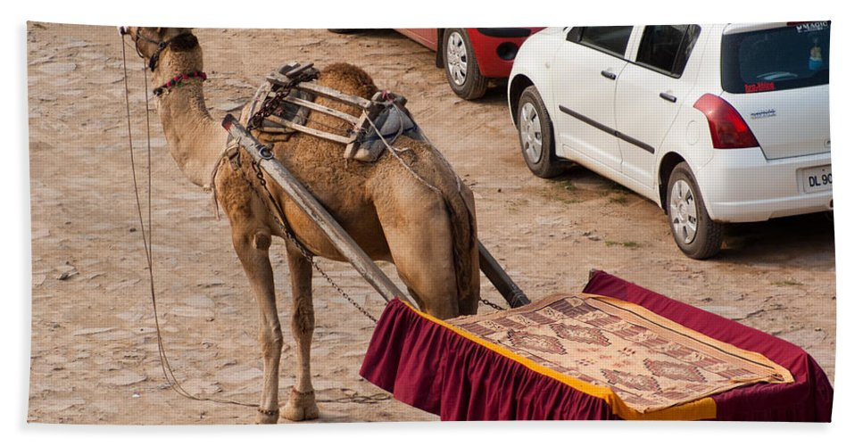Maruti Beach Towel featuring the photograph Camel Ready To Take Tourists For A Desert Safari by Ashish Agarwal