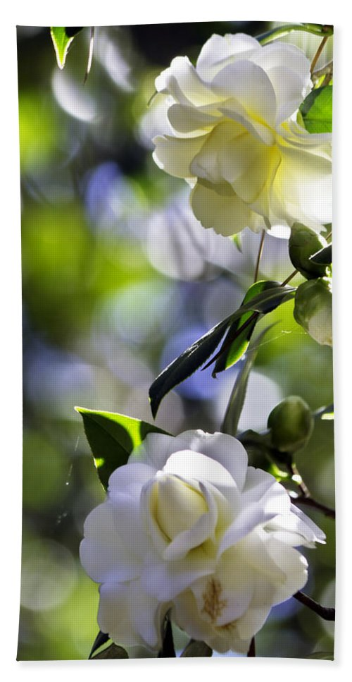 Camellia Beach Towel featuring the photograph Camellia Thirteen by Ken Frischkorn