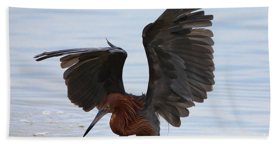 Reddish Egret Beach Towel featuring the photograph Canopy Hunting by Barbara Bowen