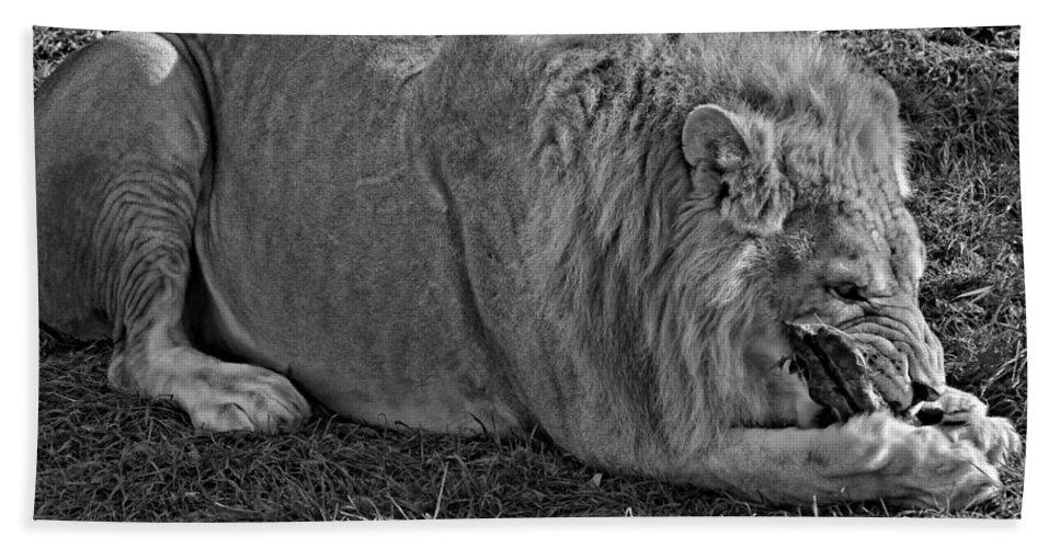 Lion Beach Towel featuring the photograph Captain Crunch Monochrome by Steve Harrington