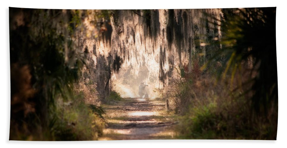Photographer Beach Towel featuring the photograph Capture by Steven Sparks