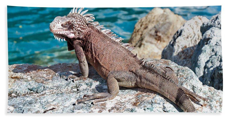 Predator Beach Towel featuring the photograph Caribbean Iguana by Jim Chamberlain