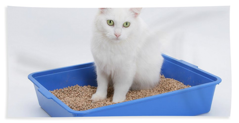 Animal Beach Towel featuring the photograph Cat Using Litter Tray by Mark Taylor