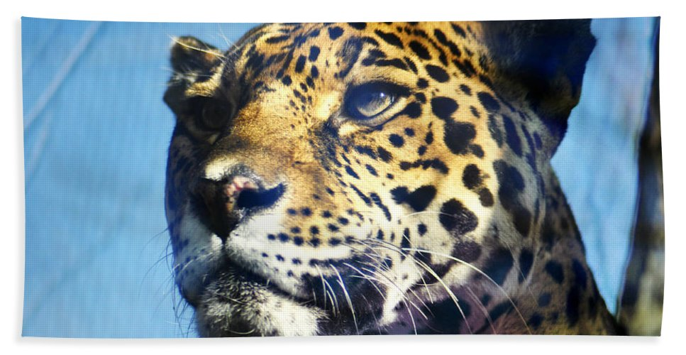 Cats Eyes - Leopard Beach Towel featuring the photograph Cats Eyes - Leopard by Bill Cannon