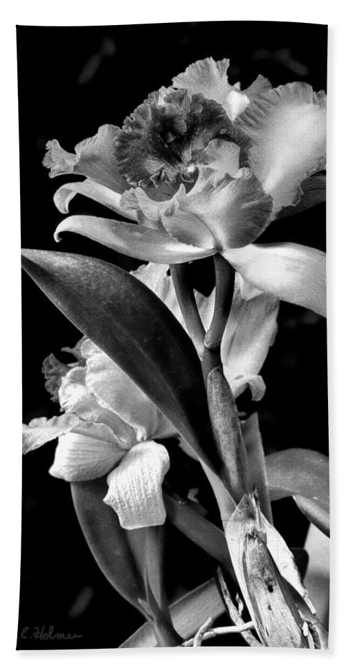 Cattleya Beach Towel featuring the photograph Cattleya - Bw by Christopher Holmes