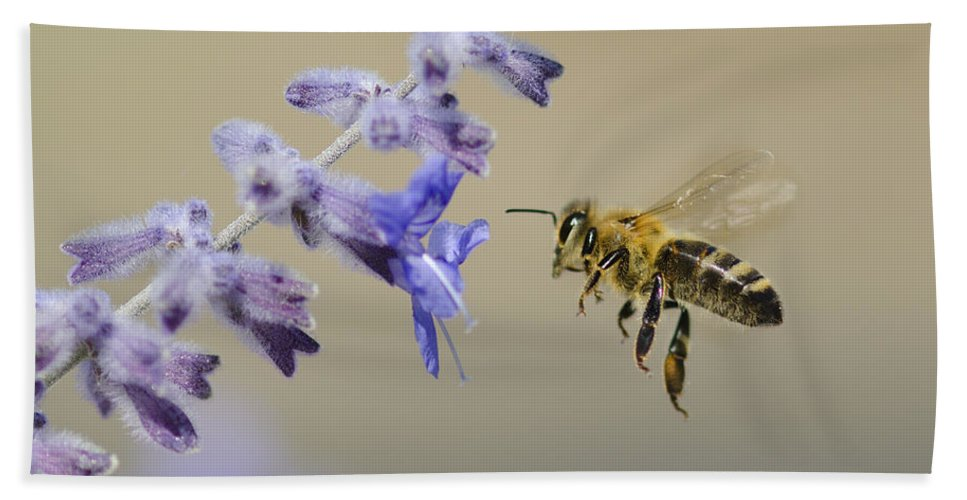 Honey Bee Beach Towel featuring the photograph Caught In Flight by Dianne Phelps