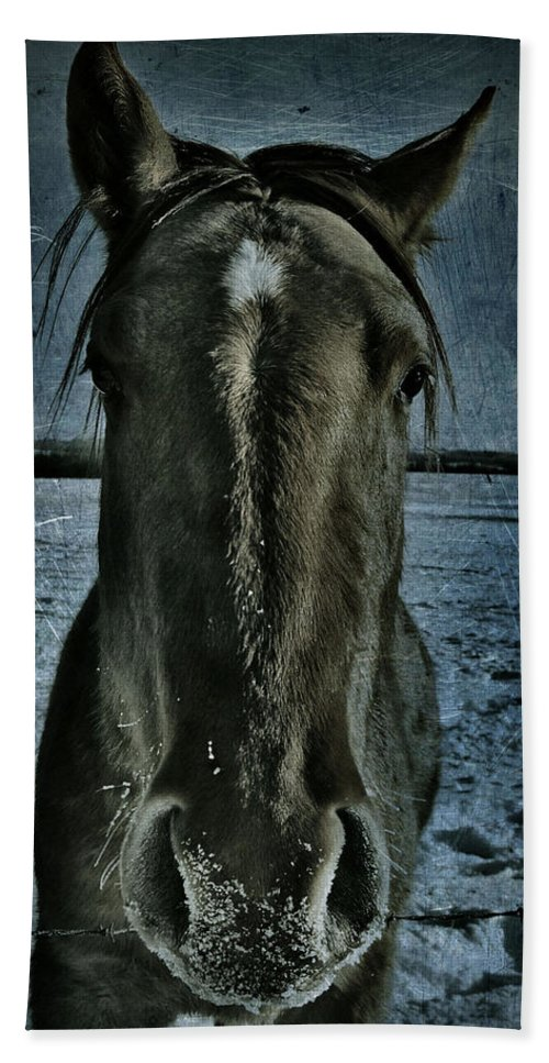 : Jerry Cordeiro Photographs Beach Towel featuring the photograph Charlie by The Artist Project