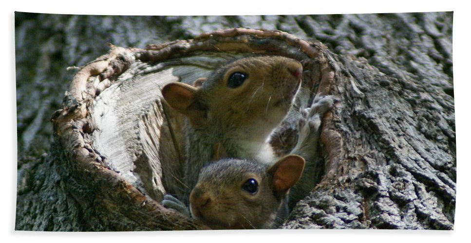Squirrels Beach Towel featuring the photograph Checking Out The Photographer by Ben Upham III