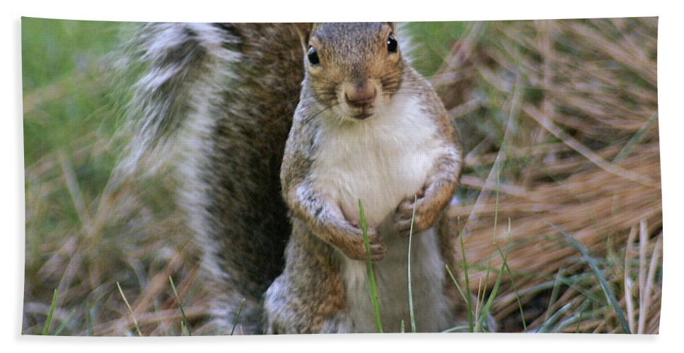 Squirrel Beach Towel featuring the photograph Checking Things Out by Ben Upham III