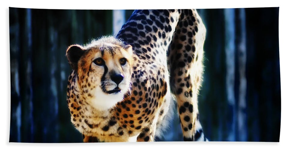 Cheeta Beach Towel featuring the photograph Cheeta by Bill Cannon