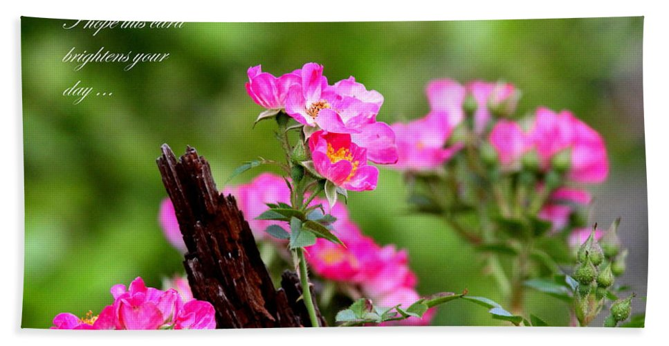 Flower Beach Towel featuring the photograph Cherokee Rose Card - Flower by Travis Truelove
