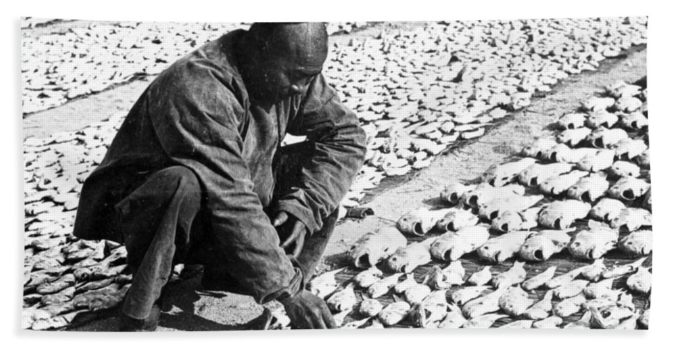 Chinese Beach Towel featuring the photograph Chinese Man Drying Fish On The Shore - C 1902 by International Images