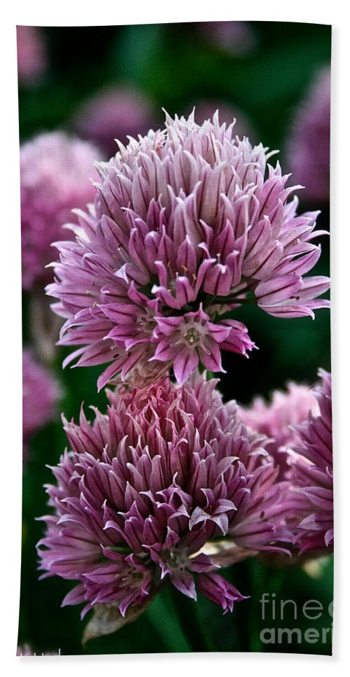 Plant Beach Towel featuring the photograph Chive Blossom by Susan Herber