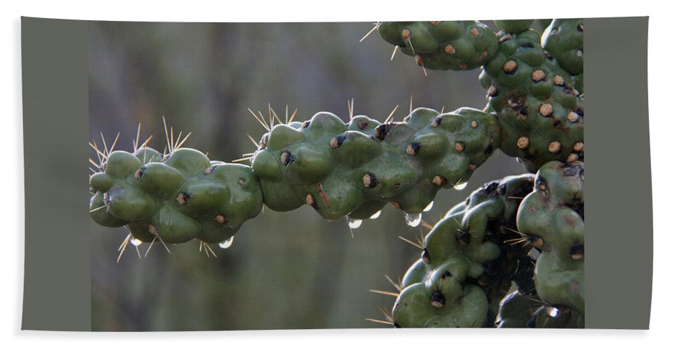 Cholla Beach Towel featuring the photograph Cholla Cactus In The Rain by Elizabeth Rose