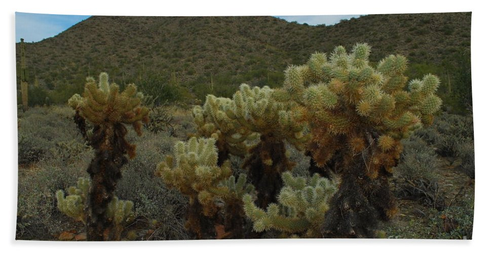 Jumping Cholla Beach Towel featuring the photograph Cholla On The Mountainside by Heather Kirk