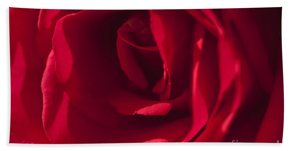 Red Rose Beach Towel featuring the photograph Classic Rose by Sandra Bronstein