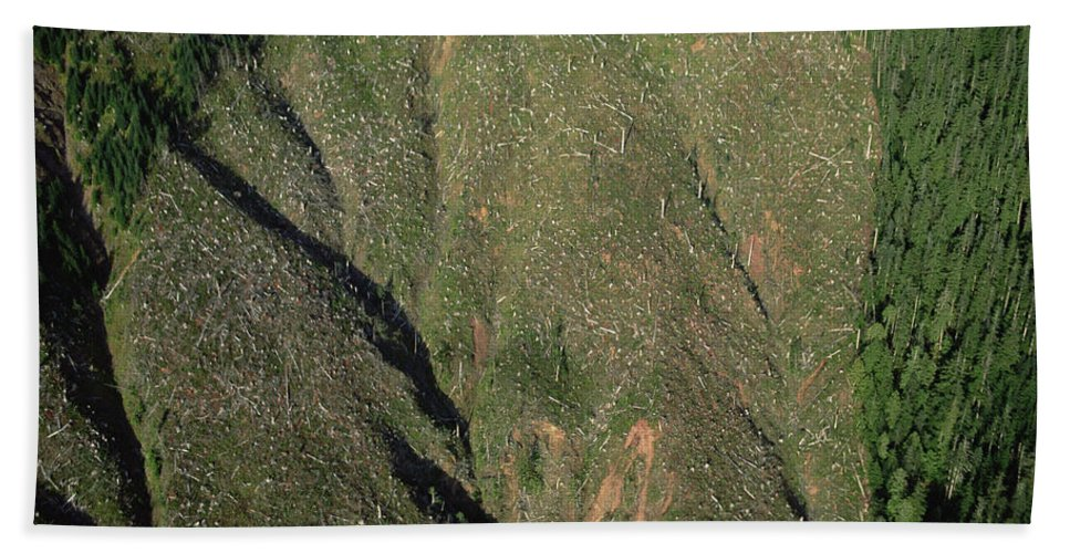 Mp Beach Towel featuring the photograph Clear Cutting, Olympic National Park by Mark Moffett