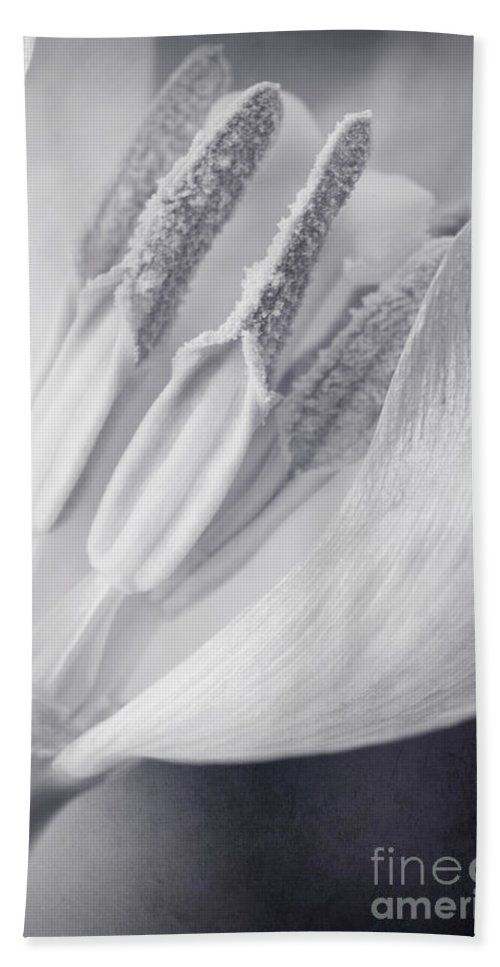 Tulip Beach Towel featuring the photograph Clear by Priska Wettstein