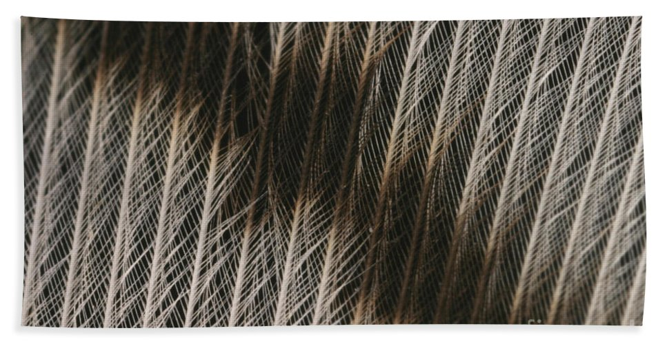 Feather Beach Towel featuring the photograph Close-up Of A Turkey Feather by Ted Kinsman