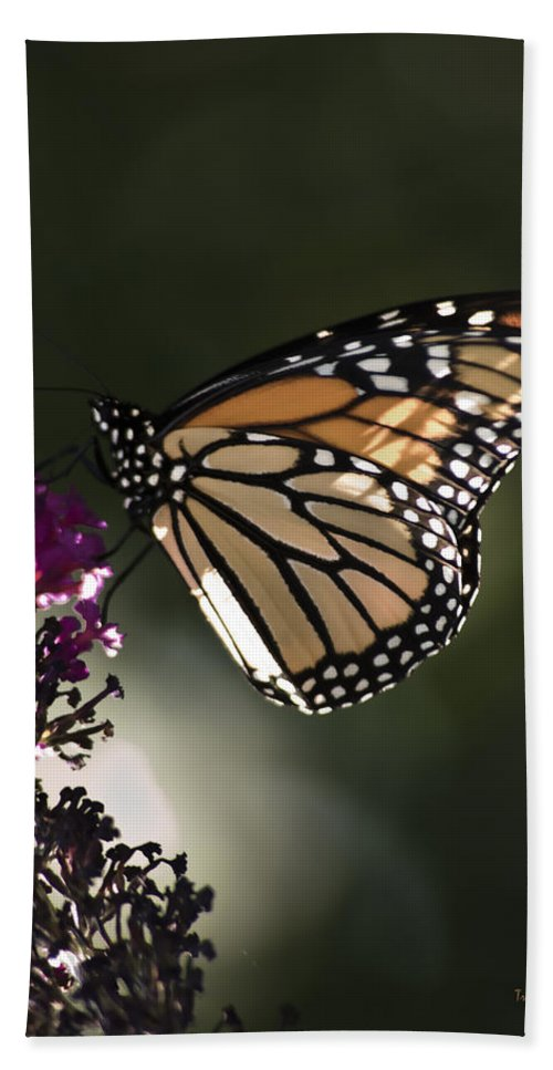 Butterfly Beach Towel featuring the photograph Cloyd's Debut by Trish Tritz