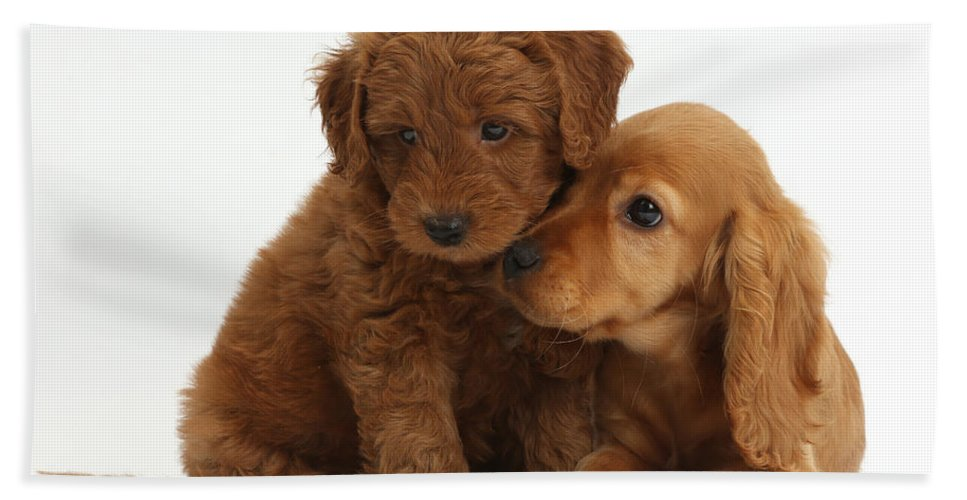 Nature Beach Towel featuring the photograph Cocker Spaniel Puppy And Goldendoodle by Mark Taylor