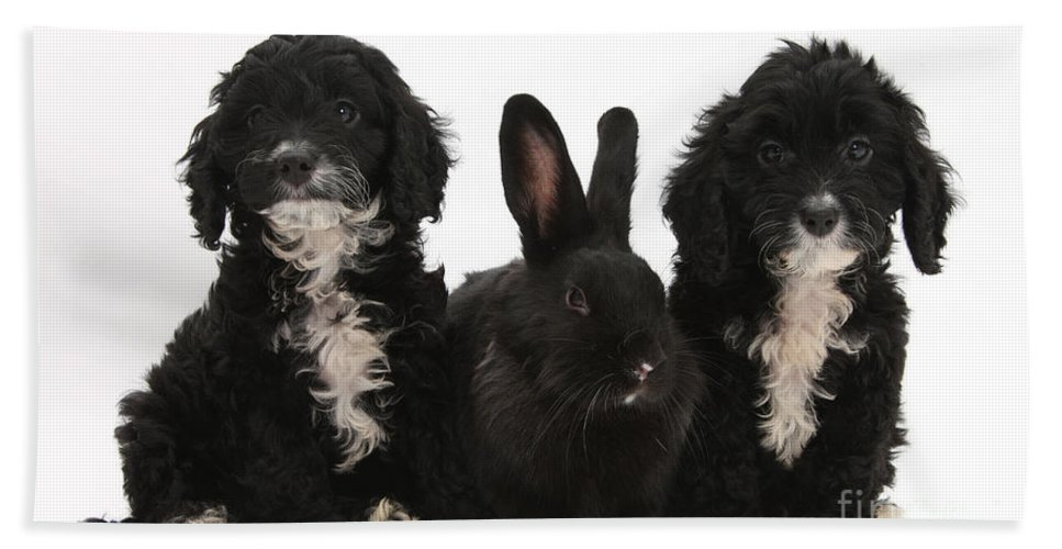Animal Beach Towel featuring the photograph Cockerpoo Pups And Rabbit by Mark Taylor