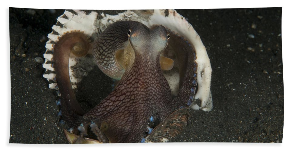 Cephalopod Beach Towel featuring the photograph Coconut Octopus In Shell, North by Mathieu Meur
