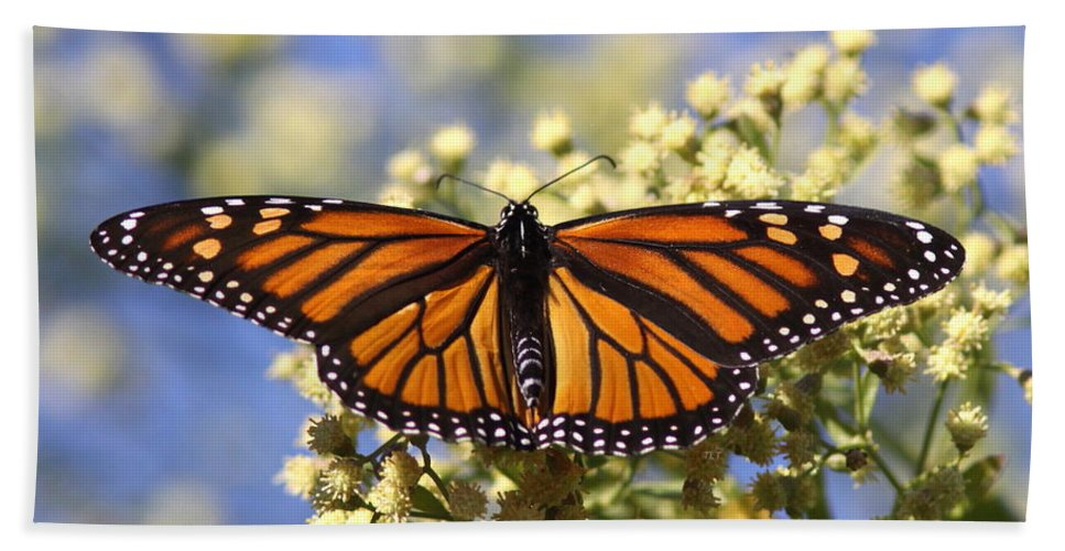 Butterflies Beach Towel featuring the photograph Color Me Wow by Travis Truelove