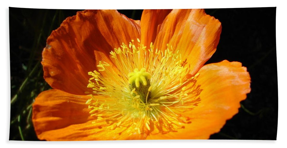 Colorado Flowers Beach Towel featuring the photograph Colorado Flower by Randy J Heath