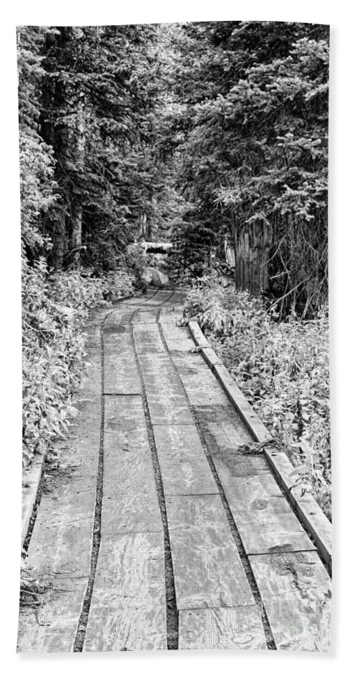 'brainard Lake' Beach Towel featuring the photograph Colorado Rocky Mountain Forest Path Bw by James BO Insogna